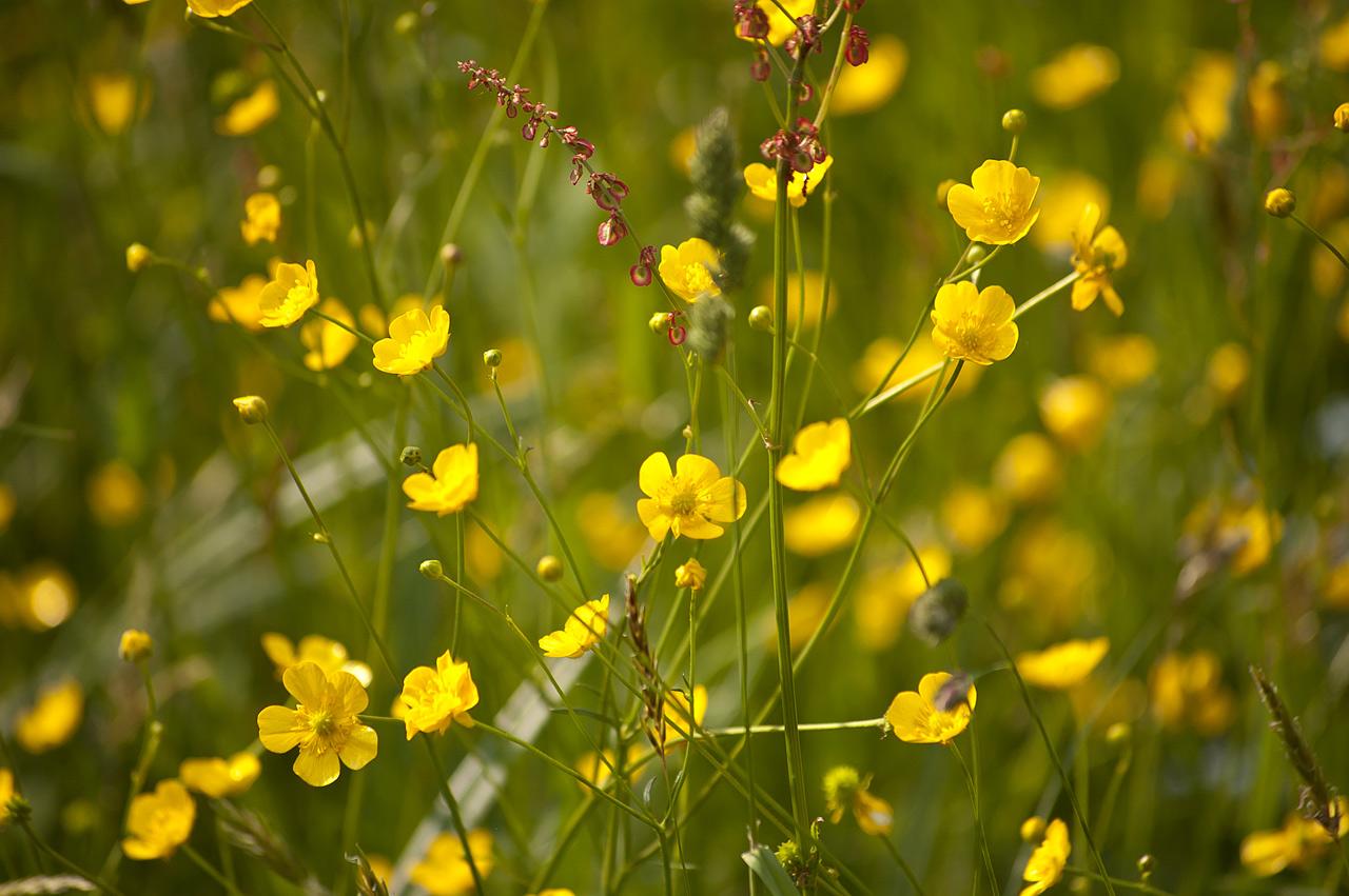 Цветы Карпаты 2011